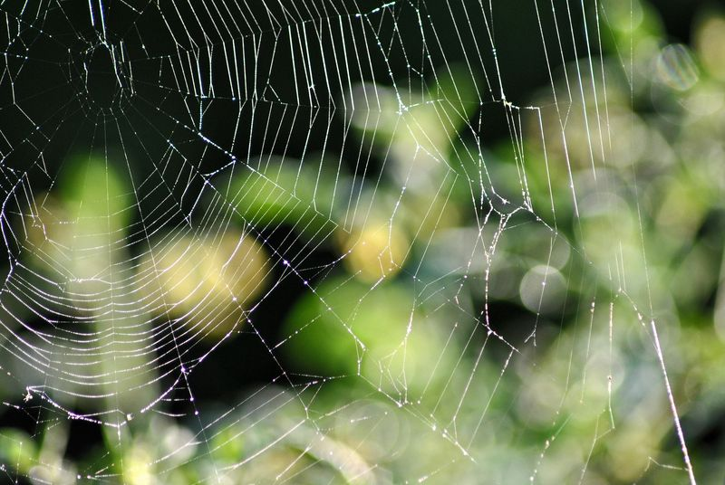 Another Spider Web 1