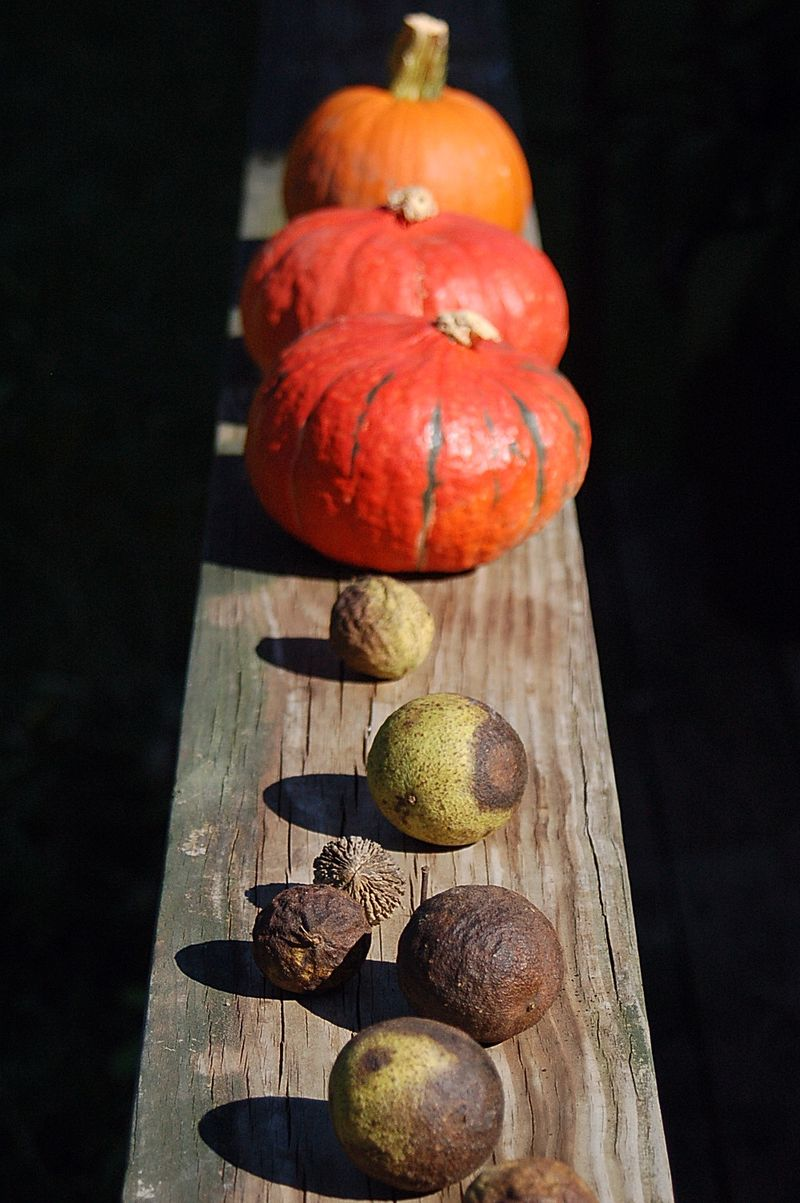 pumpkins and walnuts